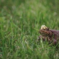 Симпатичная жаба :: Ольга Никонорова