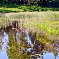 водное зеркало :: vg154