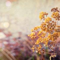 Прошлогодние цветы :: Юка Добрынина