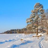 Финский залив. :: Андрей Зайцев