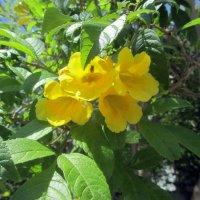 цветы Кипра :: tgtyjdrf