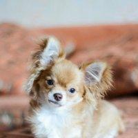 Моя собака :: Марина Коршикова