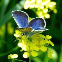 цветок на цветке :: Александр Прокудин