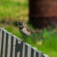 Кормящие птахи. :: Валерий Жалабкевич