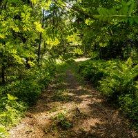 Токсово прогулка по лесу :: Irina Novikova