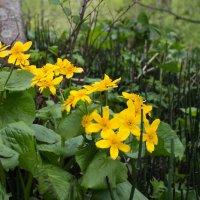 лесные цветы :: Наталья Литвинчук