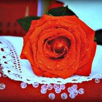 Цветы - остатки рая на земле... :: Ирина Solo