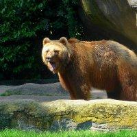 Медведь :: Nina Yudicheva