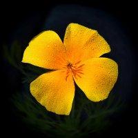 Цветок :: Nikola