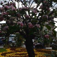 сквозь цветение... :: Галина R...