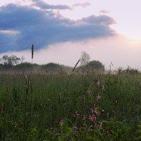 Цветочная полянка на рассвете :: Павлова Татьяна Павлова