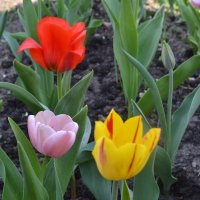 Три цвета. :: zoja