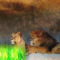 Львица и лев :: Nina Yudicheva