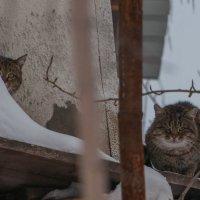 Кажется, за нами кто-то наблюдает :: Софья Оганова