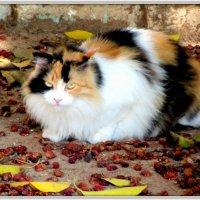 Всем котам кот!!! :: Герович Лилия