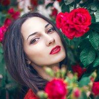 красная роза :: Марина Шавловская