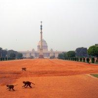 Индия. Дворец президента в Нью-Дели :: Дарья Фисун