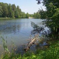 Лесной пруд :: Наталия Григорьева