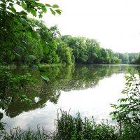 Парковое озеро в июне :: Маргарита Батырева