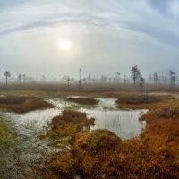 Взгляд болота. :: Фёдор. Лашков