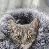 Пришли холода. :: Анна Никонорова