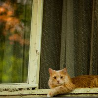 Мой сосед. :: Ольга