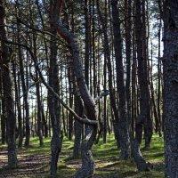 Танцующий лес :: Михаил Калакуцкий
