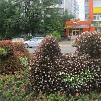Украшение города :: Елена Семигина