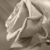 Роза и пепел :: Нина