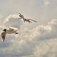 Птицы над волной :: Елена Панькина