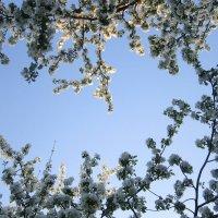 Цветы и небо :: Аlexandr Guru-Zhurzh