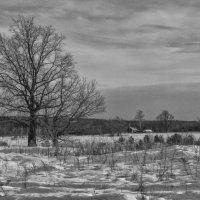 Лесной кордон :: Валерий Кролик
