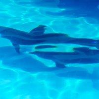 Дельфины :: Сергей Форос