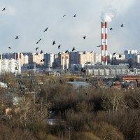 Птицы над городом :: Андрей Егоров