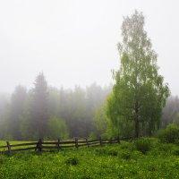 Утро в деревне :: Иван Верхотурцев