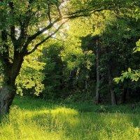 У леса на опушке... :: Лесо-Вед (Баранов)