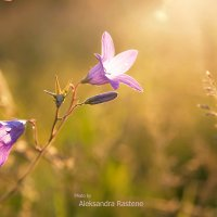 Sunset :: Aleksandra Rastene