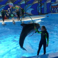 Большой Сочинский Дельфинарий в парке «Ривьера» :: Наиля