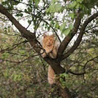 Леопард :: Виктория