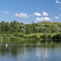 Озеро и лебеди :: Игорь Сикорский