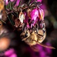 Типа пчела :: Светлана Щербакова