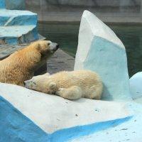 Медведица и медвежонок :: Ivan Dem