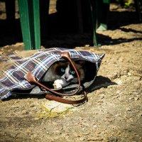кошка в сумке :: Дмитрий Беляков