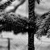 После  дождичка. :: A. SMIRNOV