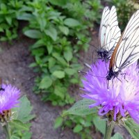 Столовая для бабочек . :: Мила Бовкун