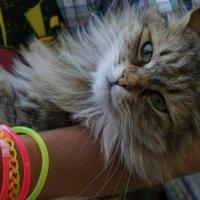 Кошка с цепочкой прозвищ Лариска - Ларисыч - Сыч :: Иван Дмитриев