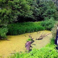 упавшее от грозы дерево похоже на крокодила :: Александр Прокудин