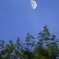 Одинокая луна :: Cain Amberskii
