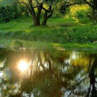 В речных протоках заблудилось солнце... :: Лесо-Вед (Баранов)
