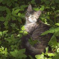 Майская кошечка :: Aнна Зарубина